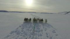 Dog Sledding on Ice Field Stock Footage