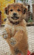 Little cute dog in a cage Stock Photos