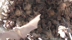 Fruit bats find shelter in the rubble - stock footage