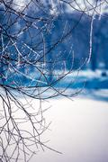 Plants covered with hoarfrost - stock photo