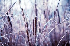 Plants covered with hoarfrost Stock Photos