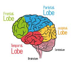 Brain design. organ icon. Flat illustration, vector graphic - stock illustration