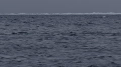 Narwhals surface and spout in stormy arctic seas with ice in back - stock footage