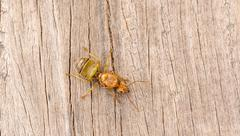 The queen ant on wood - stock photo