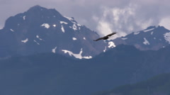 Bald Eagle In Flight With Snowy Mountains In Background Stock Footage
