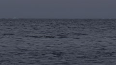 Slow motion - Narwhals swimming through waves and chop Stock Footage