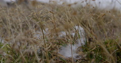 Close on goose feather blowing in grass on tundra breeze Stock Footage
