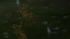 Swarming mayflies on the water surface, slowmotion Stock Footage