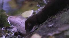 Martin eating Salmon on lakeshore Stock Footage