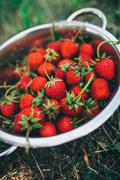 Bowl with freshly picked homegrown organic strawberries - stock photo