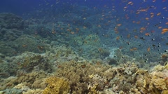 Colorful coral reef with tons of tropical fish. - stock footage