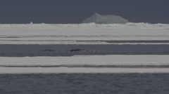 Slow motion - narwhals bubble and spray between ice floes Stock Footage