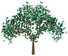 Tree with Green Leafage Stock Illustration