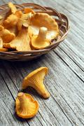 Mushroom Yellow chanterelle on wooden background. - stock photo