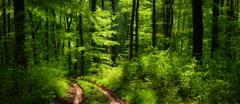 Dreamy scenery in the forest Stock Photos