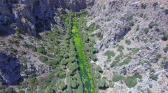 Aerial of the palm forest river in the mountains Stock Footage