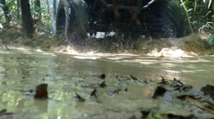 Ride ATV in the jungle pass the water Stock Footage