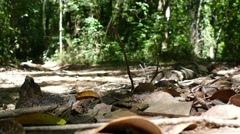 Riding ATV in the jungle very exciting - stock footage