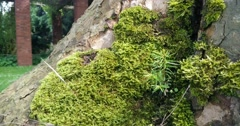 Moss close up and move out Stock Footage