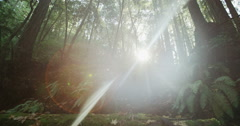 Sun Flare Tracking Slow Motion Male Mountain Biker Carrying Bike Rain Forrest Stock Footage