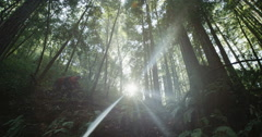 Two mountain bikers peddling across lens flare in the forest in slow motion Stock Footage