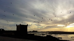 Gulls circle over the Portugese fort at Essouara Morocco Stock Footage
