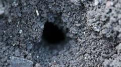 Ants make burrow on the ground. Macro shot. Stock Footage