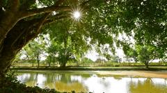Sun shining through tree in the park Stock Footage