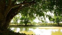 Dolly shot of a sun shining through tree in the park Stock Footage