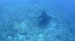 Manta Rays Cleaning Stock Footage
