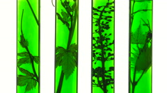 Test tubes with green liquids and vine Stock Footage