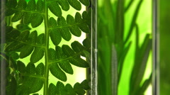 Fern and rosemary in test tubes Stock Footage