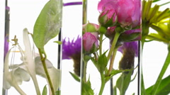 Pink, honeysuckle, thistle and dandelion in test tubes turning Stock Footage