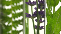 Fern, lavender and mint in test tubes - stock footage