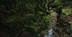 Tracking camera above two mountain bikers in the rain forest racing Stock Footage