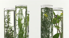 chives, dill, thyme, basil,  curry and mint in test tubes - stock footage