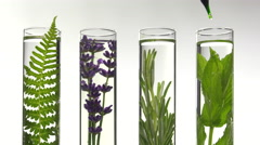 Fern, lavender, rosemary and mint in test tubes Stock Footage