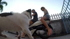Dog Jumping on Motorbike. Funny Happy Family. Slow Motion. - stock footage