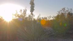 Pan Over Desert Landscape Stock Footage