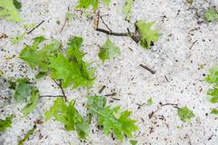 Large hail and green leaves fallen from trees Stock Photos