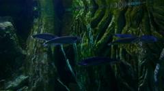 Fish swimming in water tank aquarium Stock Footage