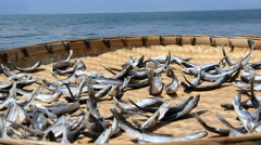 Traditional Yunan Dried Fish Stock Footage