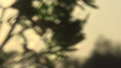 Thickets on the banks of the river Stock Footage