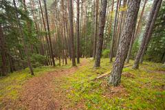 Inside a typical forest of the Italian Alps Stock Photos
