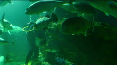 scuba diver feed fish in water tank aquarium - stock footage