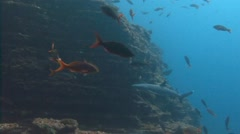 Fantastic dives with sharks at the island of ROCA Partida. Stock Footage