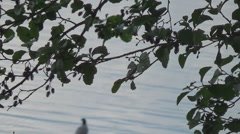 Gull sitting on a snag Stock Footage