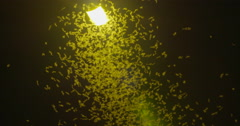 Mayflies swarming the light of the street lamps Stock Footage