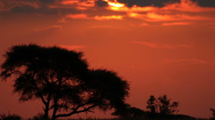 Stunning African Sunset in the Kalahari in Mokala National Park, South Africa Stock Footage