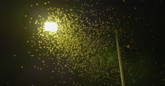 Mayflies swarming toward the light Stock Footage